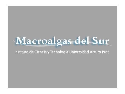 Macro Algas del Sur - WDesign - Diseño Web Puerto Montt
